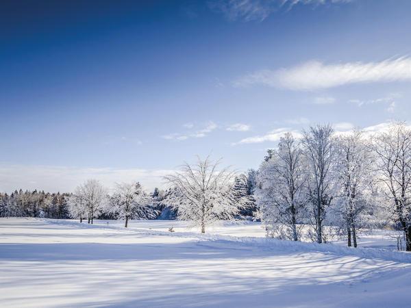 Harter Winter
